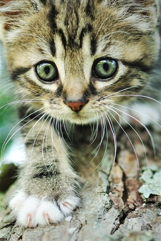 iPhone Wallpaper Kitten, gray striped, wood, bark, bokeh