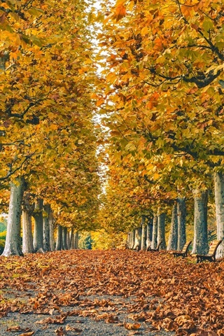 iPhone Wallpaper Park, road, leaves, trees, grass, autumn