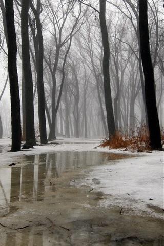 iPhone Wallpaper Winter, trees, snow, ice, water, fog, rain