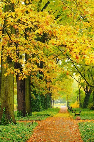 iPhone Wallpaper Autumn, park, trees, yellow leaves, paths, benches