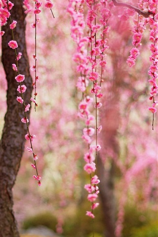 iPhone Wallpaper Beautiful spring, pink flowers bloom, trees