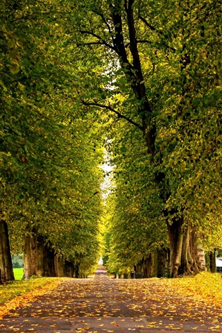 iPhone Wallpaper Leaves, forest, trees, park, grass, road, autumn