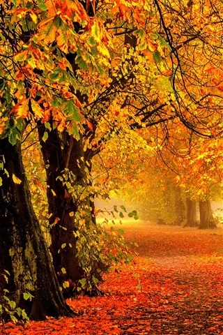 iPhone Wallpaper Nature autumn, forest, park, trees, leaves, colorful, road