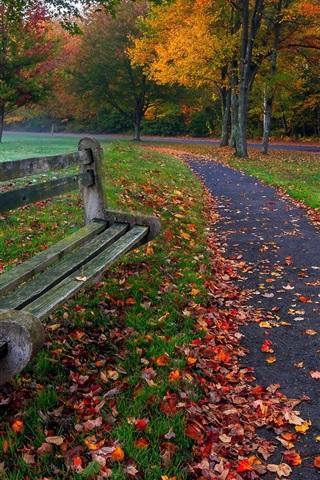 iPhone Wallpaper Park, trees, leaves, grass, road, bench, colors, autumn