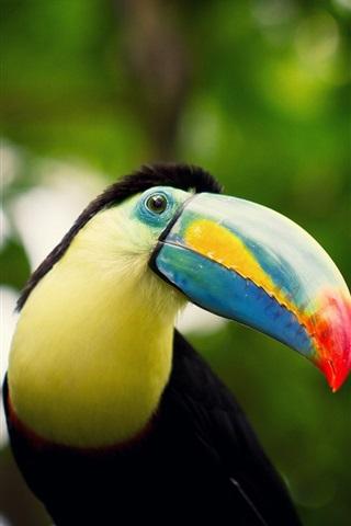 iPhone Wallpaper Toucan, beak, eyes, bokeh