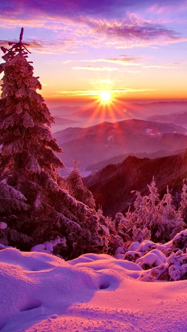 Winter Sky Sunset Mountains Forest Trees Spruce Snow