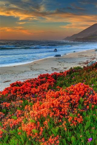 iPhone Wallpaper Beach, sea, coast, flowers, sunset