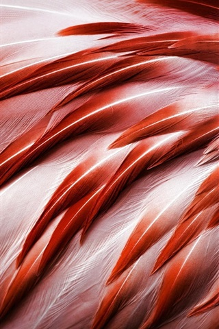 iPhone Wallpaper Bird, flamingo feathers