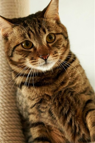 iPhone Wallpaper Cat sitting