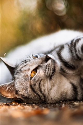 iPhone Wallpaper Cute cat, lying road, mustache, nose, paws, bokeh
