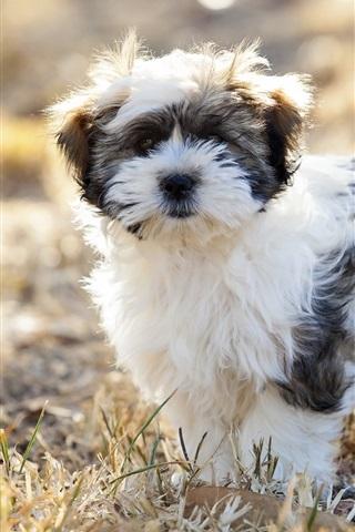 iPhone Wallpaper Furry dog, grass, bokeh
