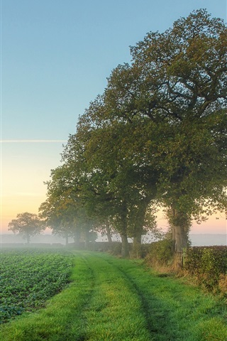 iPhone Wallpaper Nature scenery, fields, trees, mist, morning, summer