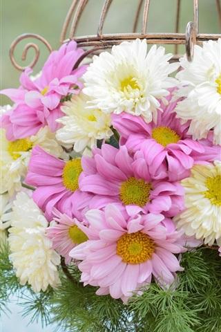 iPhone Wallpaper White pink flowers, chrysanthemum, basket