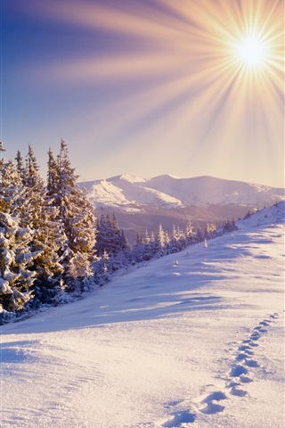 iPhone Wallpaper Winter, snow, forest, trails, mountains, sky, sun