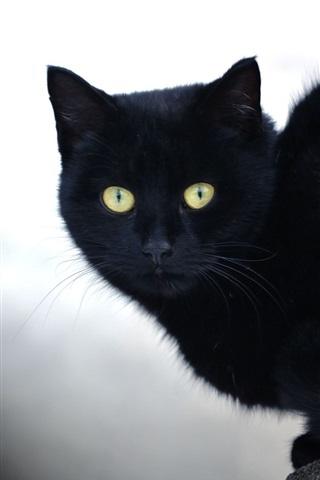 iPhone Wallpaper Black cat, yellow eyes, stone