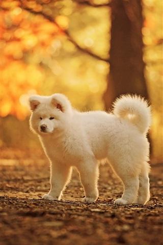 iPhone Wallpaper Cute white dog, autumn, trees