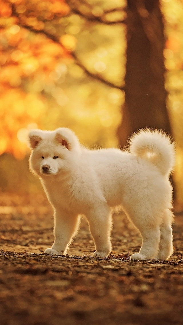 Wallpaper Cute White Dog Autumn Trees 1920x1200 Hd Picture