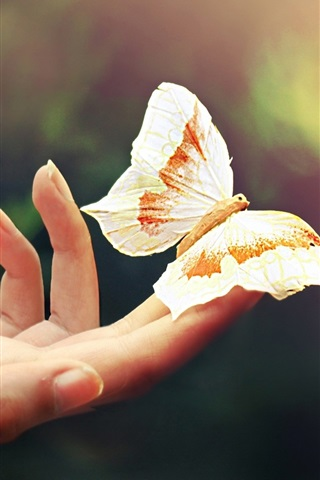iPhone Wallpaper Hand, fingers, butterfly