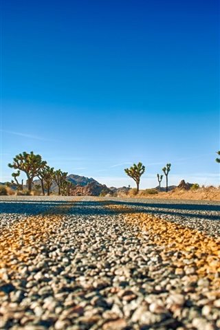 iPhone Wallpaper Joshua Tree National Park, California, USA, road, trees, sky