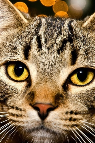 iPhone Wallpaper Tabby cat, yellow eyes, bokeh, lights