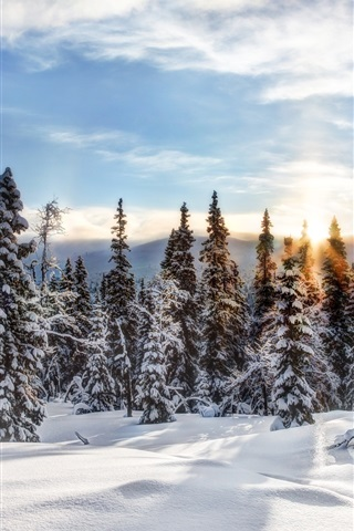 iPhone Wallpaper Trysil, Norway, winter, snow, forest, trees, spruce, sun