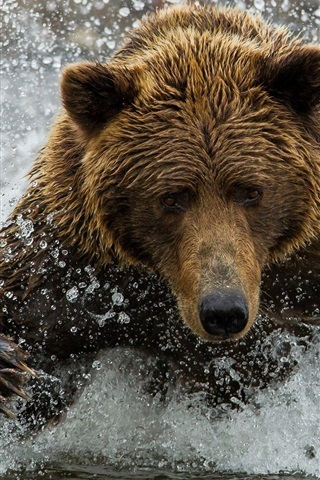 iPhone Wallpaper Brown bear, water, splash
