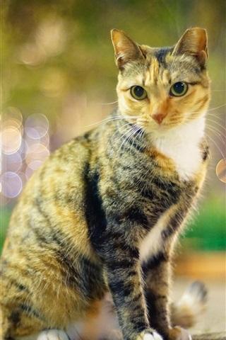 iPhone Wallpaper Cat, eyes, evening, lights