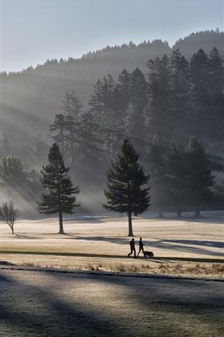 iPhone Wallpaper Morning light, park, trees, fog