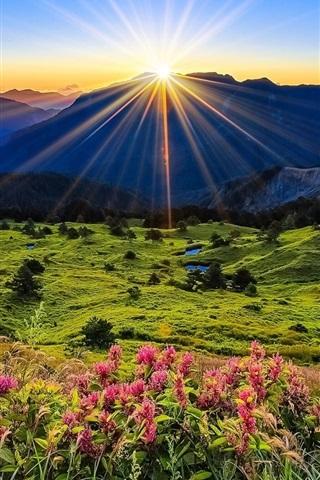 wallpaper mountains meadow sunrise flowers beautiful