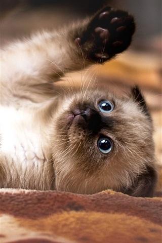 iPhone Wallpaper Playful kitten