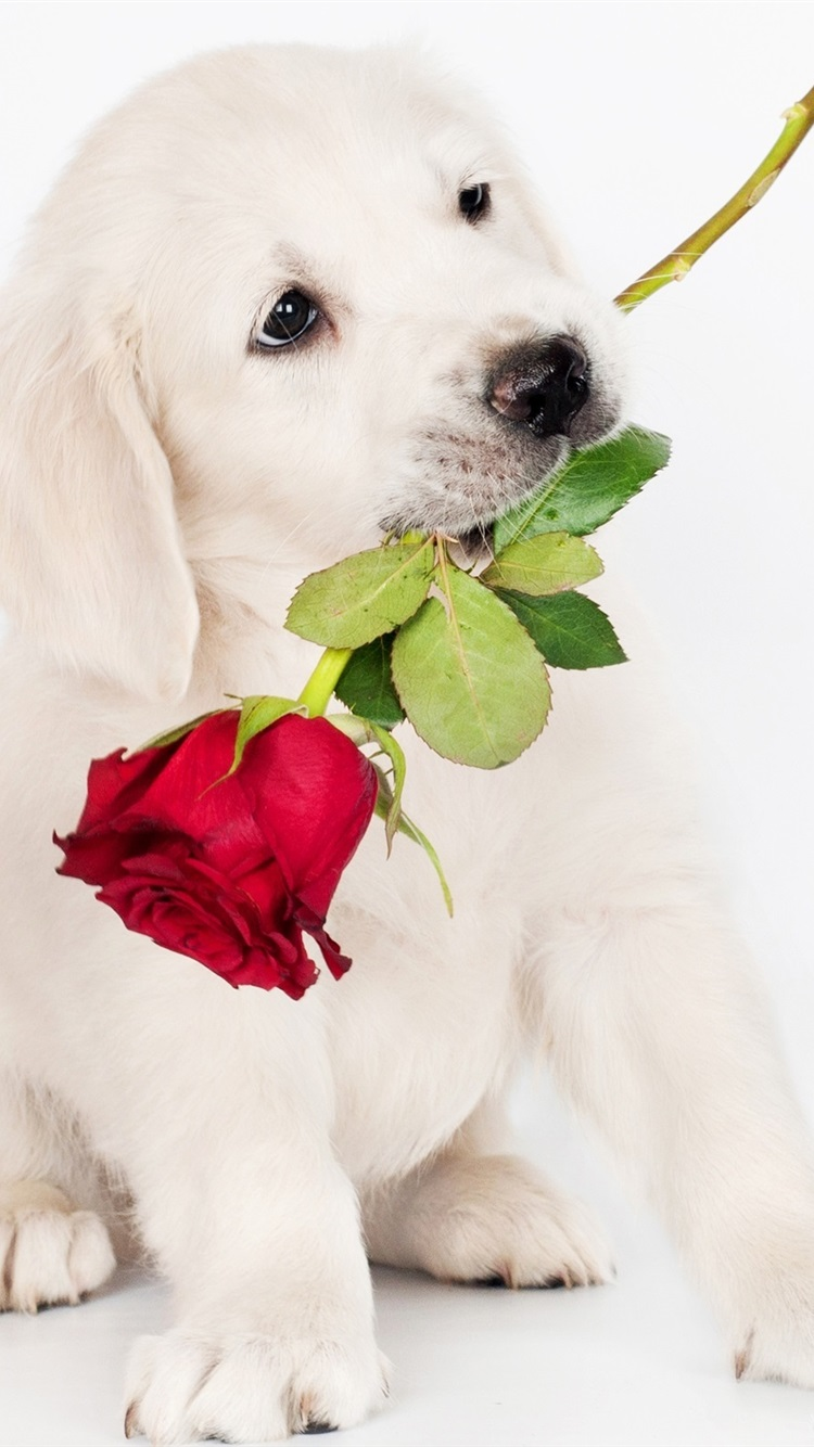 Wallpaper White Dog Rose 2560x1600 Hd Picture Image