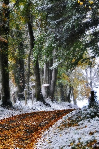 iPhone Wallpaper Winter, road, nature, trees