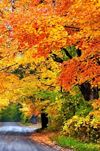 iPhone Wallpaper Colorful autumn, road, trees, park