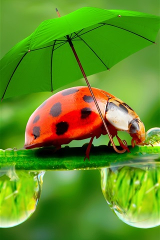 iPhone Wallpaper Creative pictures, water droplets, dew, ladybugs, umbrellas