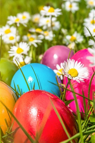 iPhone Wallpaper Easter, colorful eggs, flowers, daisies