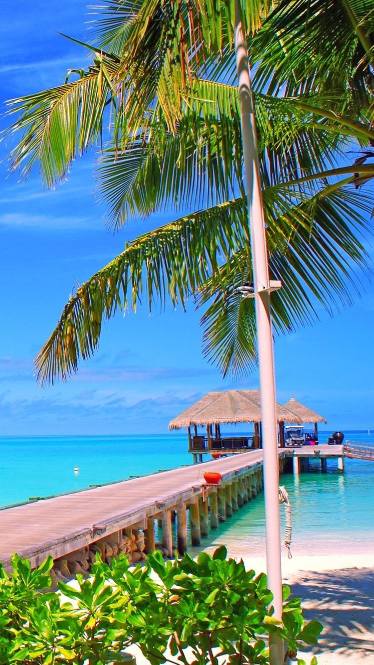 Fonds D Ecran Maldives Ile Palmiers Pont Bungalows Mer Ocean 2560x1600 Hd Image