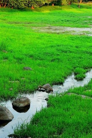 iPhone Wallpaper Spring, forest, grass, stream, rocks