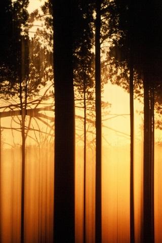 iPhone Wallpaper Sunset forest trees, black shadow, warm orange