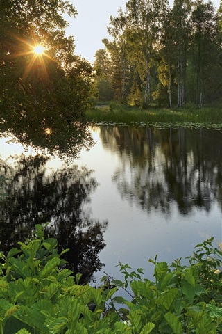 iPhone Wallpaper Sweden, lake, forest, trees, sun rays