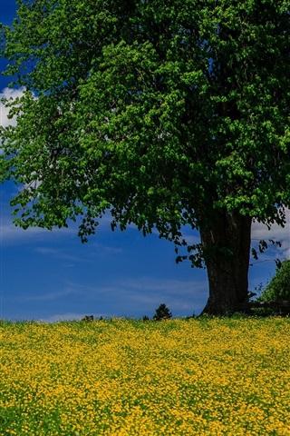 iPhone Wallpaper Tree, meadow, summer, blue sky, clouds