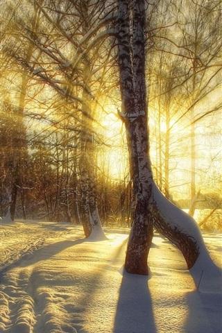 iPhone Wallpaper Winter, snow, trees, sunset, sun rays