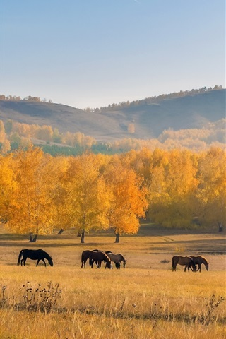 iPhone Wallpaper Autumn, horses, trees, grass, yellow, hill