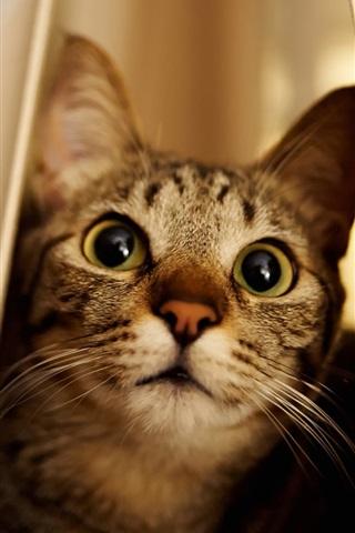 iPhone Wallpaper Cat, peeps