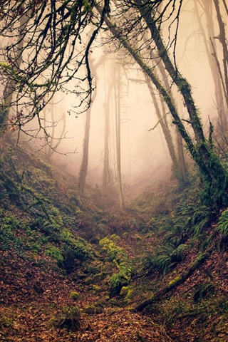 iPhone Wallpaper Forest, trees, branches, ravine, fog