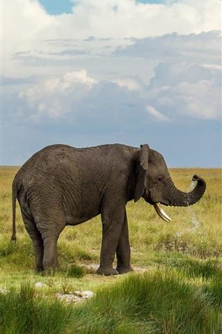 iPhone Wallpaper Prairie, elephant, grass, sky, clouds