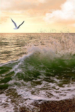 iPhone Wallpaper Sunset, coast, gull, sea waves, clouds