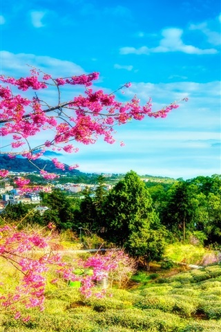 iPhone Wallpaper Taiwan, China, spring, cherry, trees, mountains, house