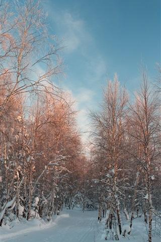 iPhone Wallpaper Winter, birch, snow, road
