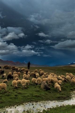 iPhone Wallpaper Prairie, river, field, sheep