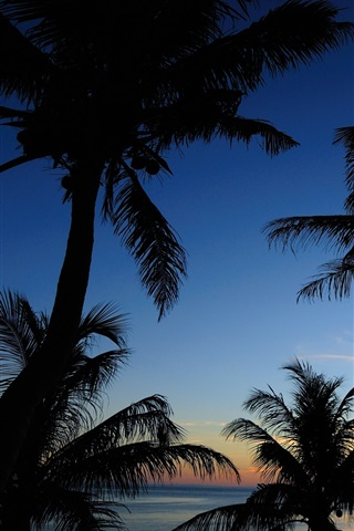 iPhone Wallpaper Sea, sky, clouds, palm trees, silhouette